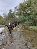Click to view album: 2018 Falling Leaves Trail Ride